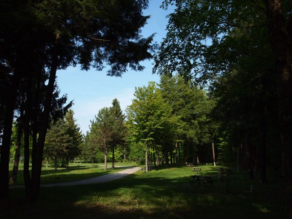 Beautiful Treed Campgrounds