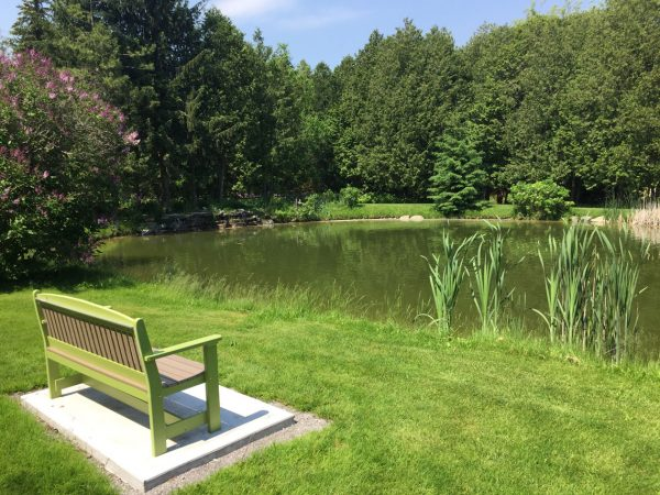 pond with park bench